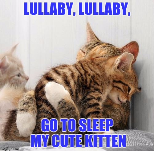 Consoling Kittens | LULLABY, LULLABY, GO TO SLEEP MY CUTE KITTEN | image tagged in consoling kittens | made w/ Imgflip meme maker