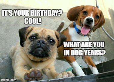 Puppy Birthday Greeting Imgflip