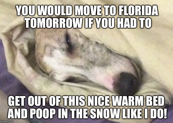 Smart dog! | YOU WOULD MOVE TO FLORIDA TOMORROW IF YOU HAD TO GET OUT OF THIS NICE WARM BED AND POOP IN THE SNOW LIKE I DO! | image tagged in dog | made w/ Imgflip meme maker