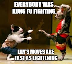 Karate cat |  EVERYBODY WAS KUNG FU FIGHTING. LILY'S MOVES ARE FAST AS LIGHTENING | image tagged in karate,kung fu,cat,kitten,fighting | made w/ Imgflip meme maker
