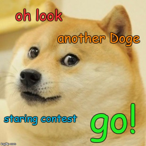 Doge Meme | oh look another Doge staring contest go! | image tagged in memes,doge | made w/ Imgflip meme maker