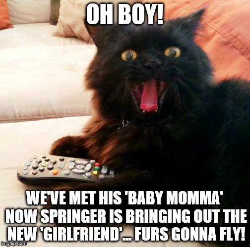 OH BOY! Cat loves watching the 'Jerry Springer Show' | OH BOY! WE'VE MET HIS 'BABY MOMMA' NOW SPRINGER IS BRINGING OUT THE NEW 'GIRLFRIEND'... FURS GONNA FLY! | image tagged in oh boy cat,memes,baby mama,jerry springer,cat fight,men cheating | made w/ Imgflip meme maker