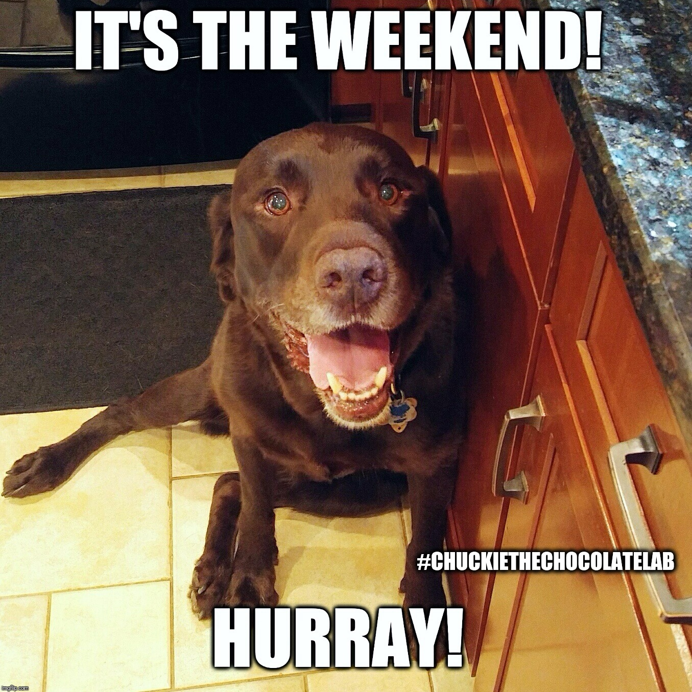 It's the weekend!  | #CHUCKIETHECHOCOLATELAB | image tagged in chuckie the chocolate lab,weekend,memes,tgif,labrador,dogs | made w/ Imgflip meme maker