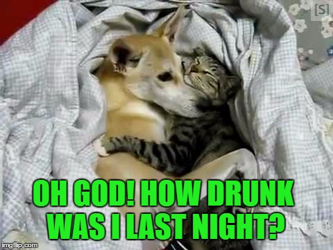 Bro, I can explain.... | OH GOD! HOW DRUNK WAS I LAST NIGHT? | image tagged in dog and cat,memes,lol | made w/ Imgflip meme maker