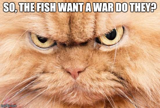 SO, THE FISH WANT A WAR DO THEY? | made w/ Imgflip meme maker