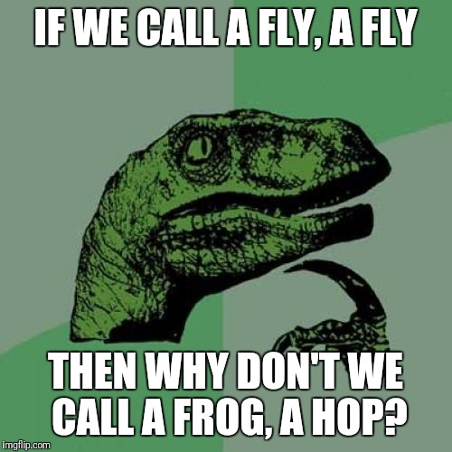 Philosoraptor Meme | IF WE CALL A FLY, A FLY THEN WHY DON'T WE CALL A FROG, A HOP? | image tagged in memes,philosoraptor,frog | made w/ Imgflip meme maker