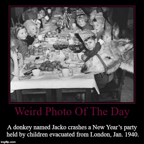 The Jackass Of The Party | Weird Photo Of The Day | A donkey named Jacko crashes a New Year's party held by children evacuated from London, Jan. 1940. | image tagged in funny,demotivationals,weird,photo of the day,new year's,jackass | made w/ Imgflip demotivational maker