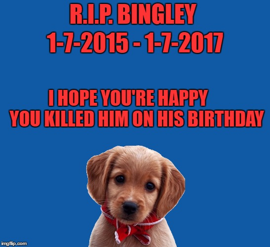 R.I.P. BINGLEY I HOPE YOU'RE HAPPY      YOU KILLED HIM ON HIS BIRTHDAY 1-7-2015 - 1-7-2017 | made w/ Imgflip meme maker