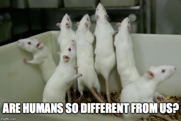 ARE HUMANS SO DIFFERENT FROM US? | made w/ Imgflip meme maker