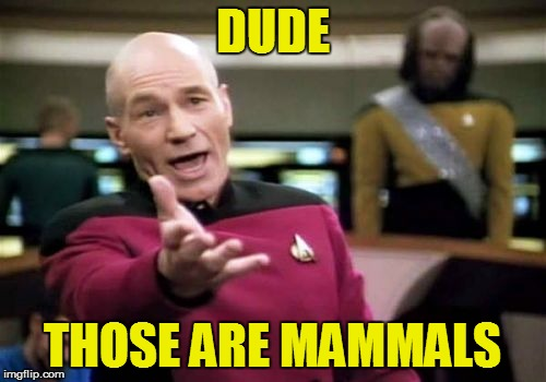 Picard Wtf Meme | DUDE THOSE ARE MAMMALS | image tagged in memes,picard wtf | made w/ Imgflip meme maker