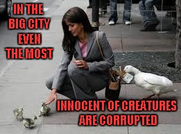 Way to teach those street smarts Momma Duck!!!  This is my 1000th submission, such as it is. | IN THE BIG CITY EVEN THE MOST INNOCENT OF CREATURES ARE CORRUPTED | image tagged in duck thieves,memes,ducks,funny,animals,city life | made w/ Imgflip meme maker