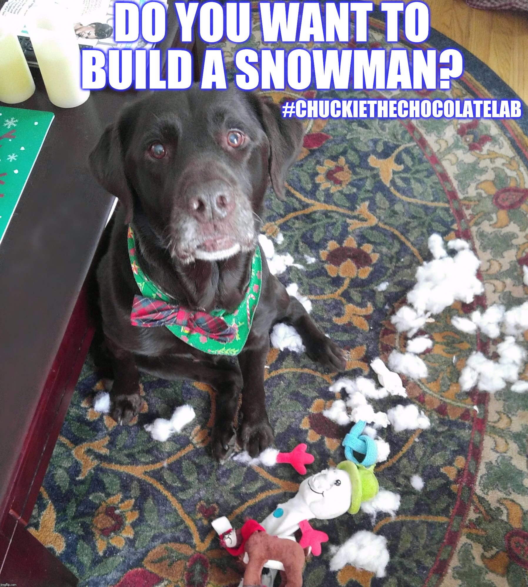 Do you want to build a snowman?  |  DO YOU WANT TO BUILD A SNOWMAN? #CHUCKIETHECHOCOLATELAB | image tagged in chuckie the chocolate lab,frozen,snowman,do you want to build a snowman,funny,memes | made w/ Imgflip meme maker