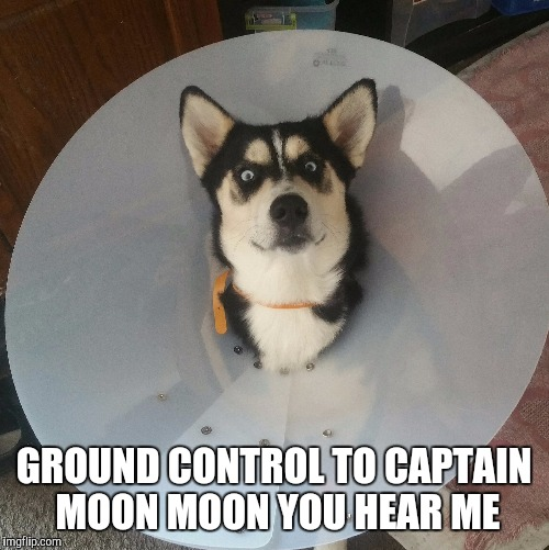Ground Control to Moon moon | GROUND CONTROL TO CAPTAIN MOON MOON YOU HEAR ME | image tagged in husky,cone of shame,bad pun dog,dog,derpy puppy | made w/ Imgflip meme maker