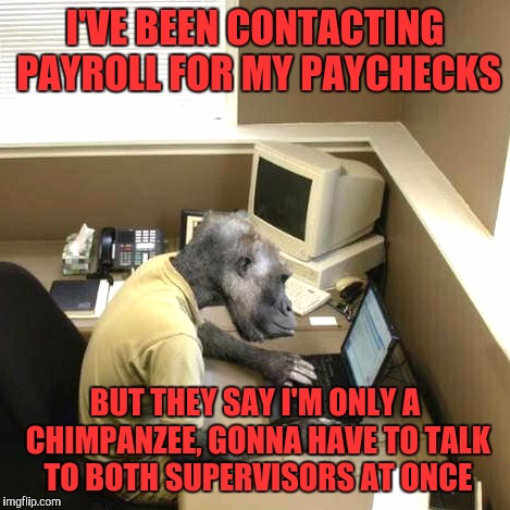 Monkey Business | I'VE BEEN CONTACTING PAYROLL FOR MY PAYCHECKS BUT THEY SAY I'M ONLY A CHIMPANZEE, GONNA HAVE TO TALK TO BOTH SUPERVISORS AT ONCE | image tagged in memes,monkey business | made w/ Imgflip meme maker