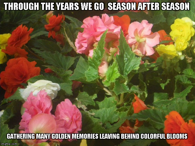 Colorful Blooms | THROUGH THE YEARS WE GO  SEASON AFTER SEASON GATHERING MANY GOLDEN MEMORIES LEAVING BEHIND COLORFUL BLOOMS | image tagged in years,seasons,golden memories,colorful blooms | made w/ Imgflip meme maker