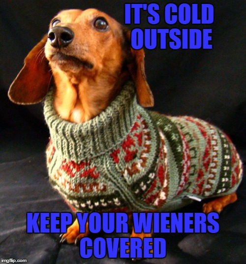What?? The dachshunds need sweaters!   | IT'S COLD OUTSIDE KEEP YOUR WIENERS COVERED | image tagged in memes,lol,lynch1979 | made w/ Imgflip meme maker