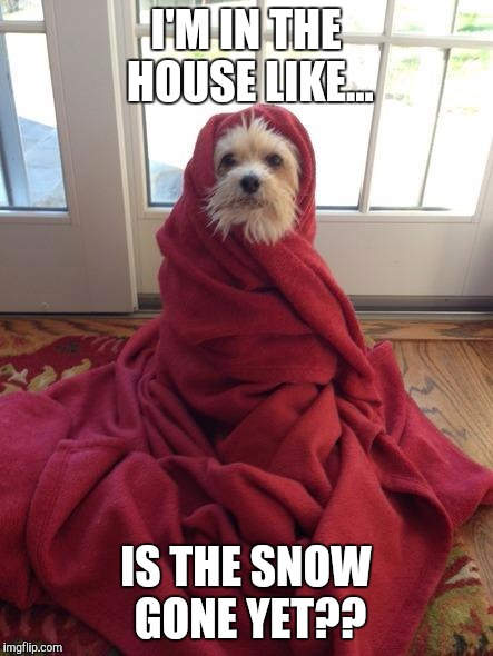 #WhyLie | I'M IN THE HOUSE LIKE... IS THE SNOW GONE YET?? | image tagged in coldpuppy,memes,funny memes,winter storm | made w/ Imgflip meme maker