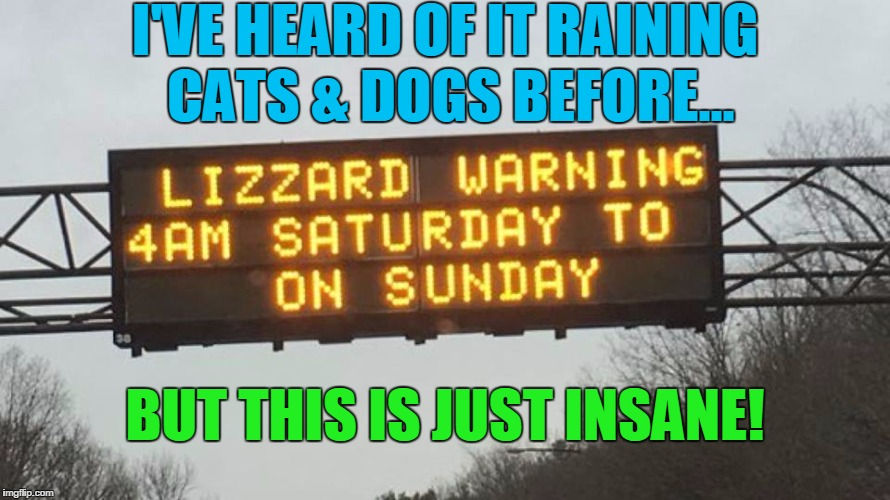 I'VE HEARD OF IT RAINING CATS & DOGS BEFORE... BUT THIS IS JUST INSANE! | image tagged in the weather is crazy | made w/ Imgflip meme maker