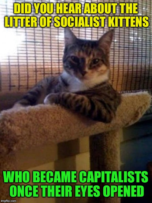 The Most Interesting Cat In The World Meme | DID YOU HEAR ABOUT THE LITTER OF SOCIALIST KITTENS WHO BECAME CAPITALISTS ONCE THEIR EYES OPENED | image tagged in memes,the most interesting cat in the world | made w/ Imgflip meme maker