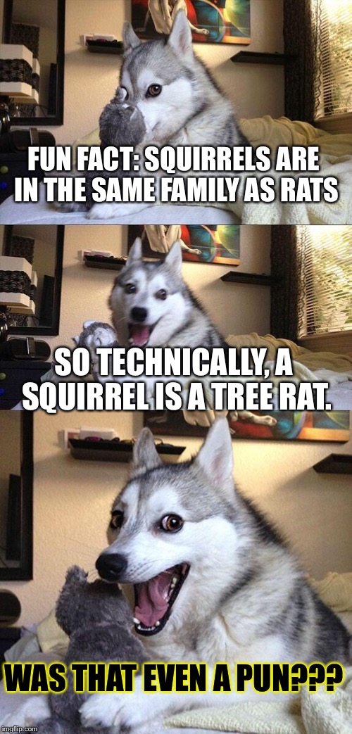 Sqweewaal! | FUN FACT: SQUIRRELS ARE IN THE SAME FAMILY AS RATS SO TECHNICALLY, A SQUIRREL IS A TREE RAT. WAS THAT EVEN A PUN??? | image tagged in memes,bad pun dog,squirrel,was that even a pun,rats | made w/ Imgflip meme maker