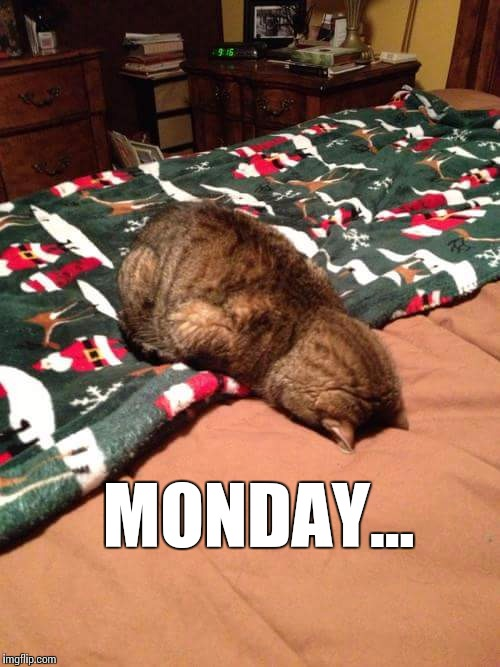 Enough said | MONDAY... | image tagged in monday,cat,face plant | made w/ Imgflip meme maker