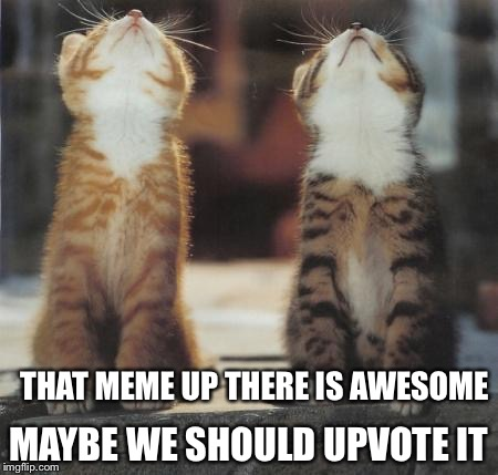 cats looking up | THAT MEME UP THERE IS AWESOME MAYBE WE SHOULD UPVOTE IT | image tagged in cats looking up | made w/ Imgflip meme maker