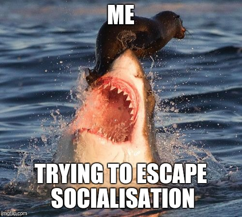 Travelonshark Meme - Imgflip