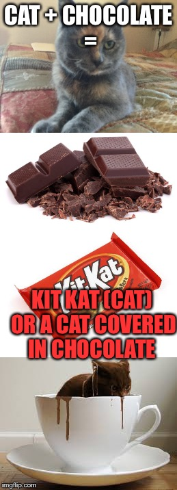 Kit Cat? |  CAT + CHOCOLATE =; KIT KAT (CAT) OR A CAT COVERED IN CHOCOLATE | image tagged in funny memes,kit kat | made w/ Imgflip meme maker