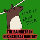 Raindeer  |  THE RAINDEER IN HIS NATURAL HABITAT | image tagged in rain | made w/ Imgflip meme maker