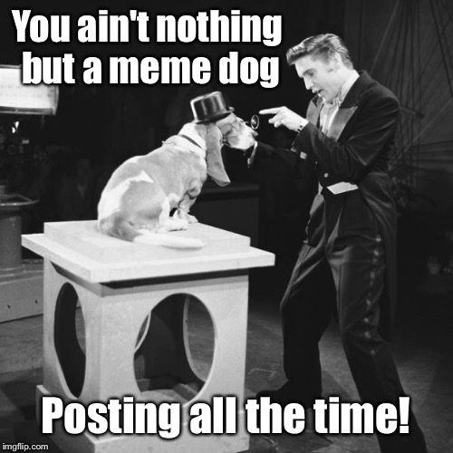 Raydog's great-great-great-great grandfather inspiring Elvis | You ain't nothing but a meme dog Posting all the time! | image tagged in memes,elvis presley,hound dog,meme dog,raydog,1956 | made w/ Imgflip meme maker