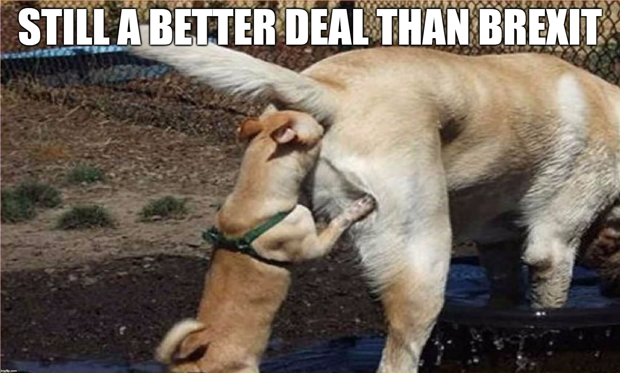 Still a Better Deal than Brexit | STILL A BETTER DEAL THAN BREXIT | image tagged in brexit,dog,shit,better,deal | made w/ Imgflip meme maker