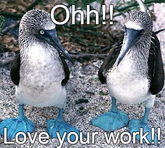Blue Footed Boobies | Ohh!! Love your work!! | image tagged in blue footed boobies | made w/ Imgflip meme maker