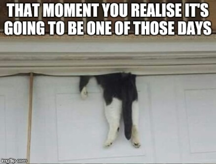 One of Those Days | image tagged in cat,garage,door,trapped,wtf,the cat was ok | made w/ Imgflip meme maker