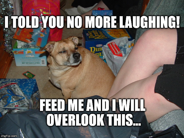 Grumpy Dog |  I TOLD YOU NO MORE LAUGHING! FEED ME AND I WILL OVERLOOK THIS... | image tagged in grumpy dog,no laughing,dog | made w/ Imgflip meme maker