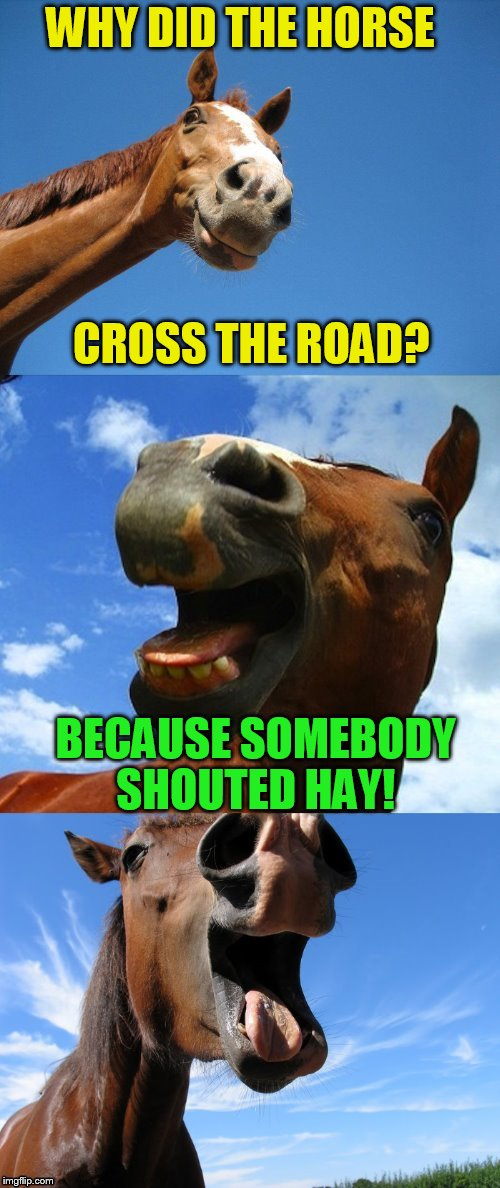 Just Horsing Around | WHY DID THE HORSE BECAUSE SOMEBODY SHOUTED HAY! CROSS THE ROAD? | image tagged in just horsing around | made w/ Imgflip meme maker