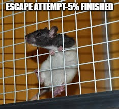 me is out! | ESCAPE ATTEMPT-5% FINISHED | image tagged in yall got any more of | made w/ Imgflip meme maker