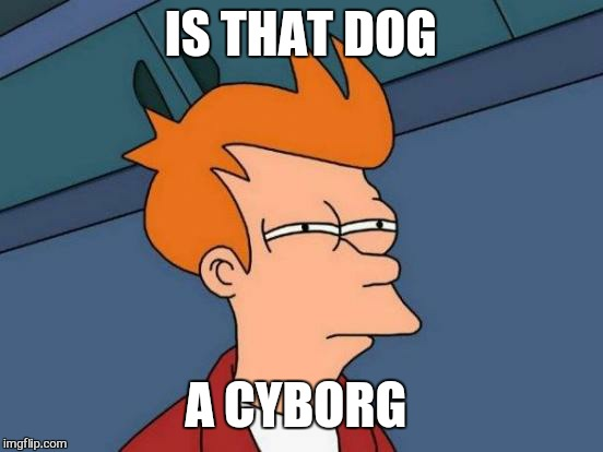 Futurama Fry Meme | IS THAT DOG A CYBORG | image tagged in memes,futurama fry | made w/ Imgflip meme maker