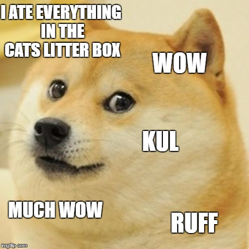 Doge | I ATE EVERYTHING IN THE CATS LITTER BOX WOW KUL MUCH WOW RUFF | image tagged in memes,doge | made w/ Imgflip meme maker