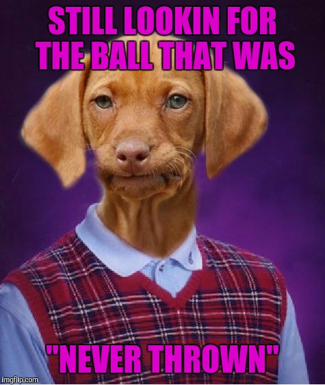 "Go get the ball buddy!, fetch, where's the ball?, where's the ball? | STILL LOOKIN FOR THE BALL THAT WAS ""NEVER THROWN"" 