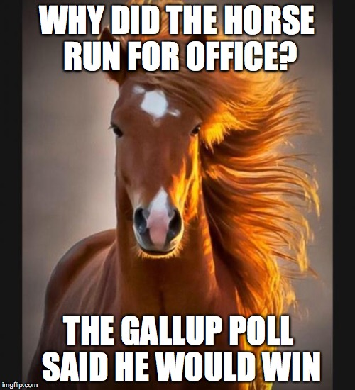 WHY DID THE HORSE RUN FOR OFFICE? THE GALLUP POLL SAID HE WOULD WIN | made w/ Imgflip meme maker
