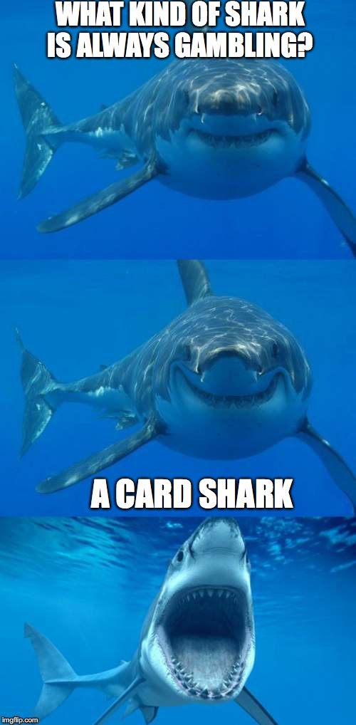 Bad Shark Pun  |  WHAT KIND OF SHARK IS ALWAYS GAMBLING? A CARD SHARK | image tagged in bad shark pun | made w/ Imgflip meme maker