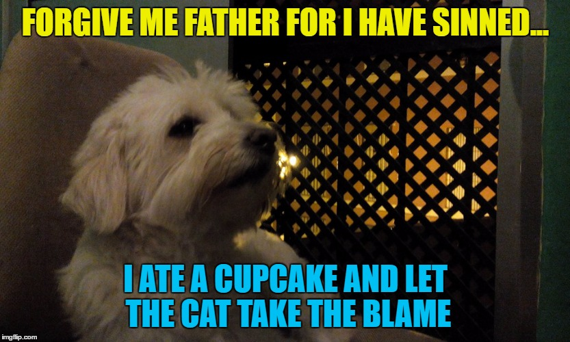 Can animals feel guilty? | FORGIVE ME FATHER FOR I HAVE SINNED... I ATE A CUPCAKE AND LET THE CAT TAKE THE BLAME | image tagged in julio,memes,animals,dogs,confessional | made w/ Imgflip meme maker
