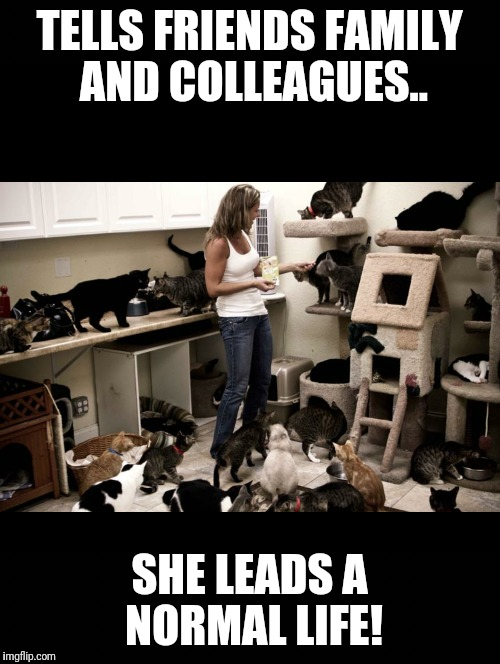 Cat Lady Meme Images
