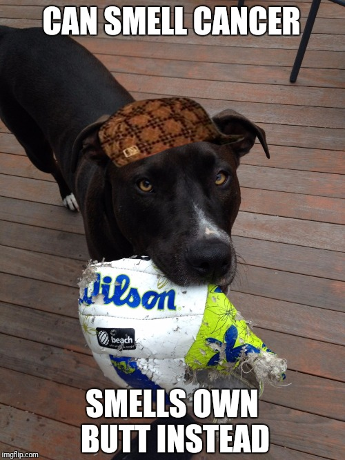 scumbag dog | CAN SMELL CANCER SMELLS OWN BUTT INSTEAD | image tagged in scumbag dog,scumbag | made w/ Imgflip meme maker