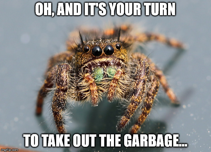 The spider really likes you, but... | OH, AND IT'S YOUR TURN TO TAKE OUT THE GARBAGE... | image tagged in roommates | made w/ Imgflip meme maker