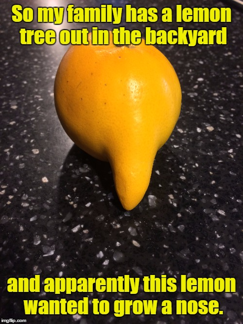Nature Is Weird... | So my family has a lemon tree out in the backyard and apparently this lemon wanted to grow a nose. | image tagged in memes,lemon,funny,nose,weird,whoa | made w/ Imgflip meme maker