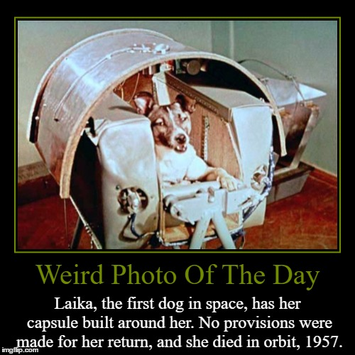 First Dog In Space | Weird Photo Of The Day | Laika, the first dog in space, has her capsule built around her. No provisions were made for her return, and she di | image tagged in funny,demotivationals,weird,photo of the day,first dog in space,laika | made w/ Imgflip demotivational maker