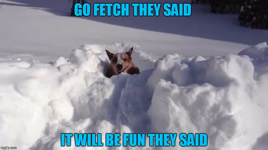 Snow Dog | GO FETCH THEY SAID IT WILL BE FUN THEY SAID | image tagged in snow,dog | made w/ Imgflip meme maker