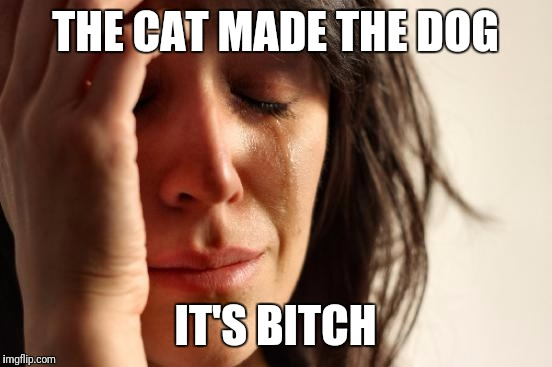 First World Problems Meme | THE CAT MADE THE DOG IT'S B**CH | image tagged in memes,first world problems | made w/ Imgflip meme maker