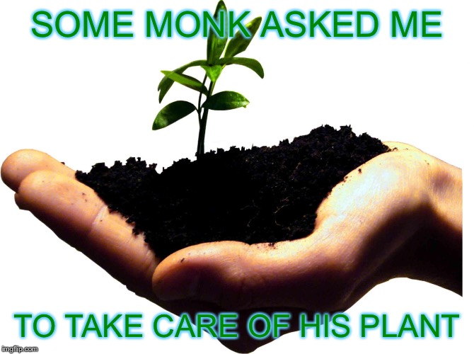 Accidentally Zen |  SOME MONK ASKED ME; TO TAKE CARE OF HIS PLANT | image tagged in beginning zen,funny,memes,gifs,america,zen | made w/ Imgflip meme maker